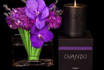 Flowers/Decor / flower arrangements and property