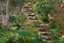Lake side Cottage Garden plans