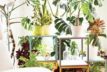 Plants for indoor