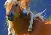 かわいい動物