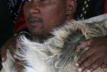 Mandla Mandela / It's story about the controversial chief of Mvezo Traditional Council, Mandla Mandela...