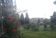 #Rose garden #Rome / Roses