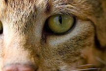cat / by sarasnd