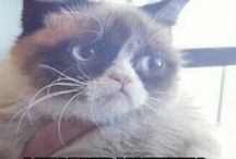 Grumpy !