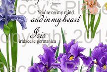 Beccy's Place Iris flowers ideas board