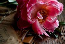 Flowers / by Mirela Terce
