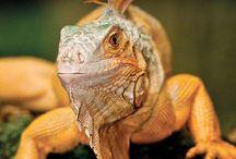 The Vivarium Digital Magazine / Zoo Med's FREE Digital Reptile and Fish News Magazine. / by Zoo Med Laboratories