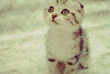Cats n animals ahhh