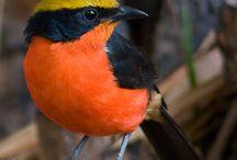 bird,s
