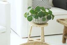 plant love / green stuff