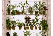 観葉植物鑑賞棚
