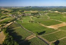 L'été au vignoble / Summer in the vineyard