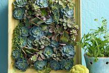 Idee piante