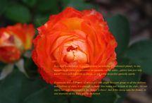 Little Prince. / Moje zdjęcia z cytatami. My photos with aphorisms.