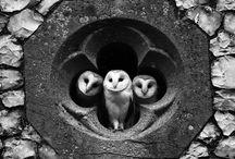 Owl Love You / by Cheryl Santa-Ana