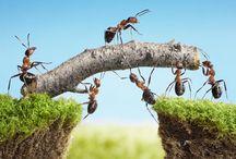 Les fourmos
