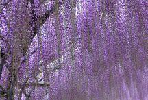 庭・花・風景
