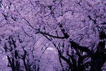 Color Me ♥ Lilac