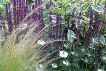 Stipa Combinations / Plant partnerships that include Mexican feather grass (also known as ponytail grass) or needle grasses (Stipa or Nassella)