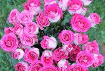 Spray Roses / Spray roses are smaller delicate, pretty and fun!