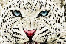 Beast of Beauty