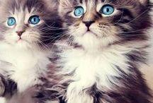 les yeux bleues