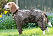 Gear on your Dogs