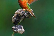 birds..,,,
