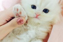 Cute and Funny Kitten