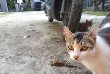 kucingq
