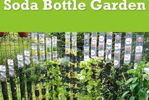 soda bottle gardening.