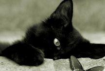 black cat - MIA -       =^-.-^=