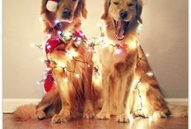 Dogs in the Holiday Spirit / We love the holidays almost as much as these dogs!