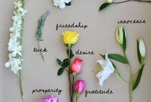 Fiori, i significati // Meanings of flowers / Simbologia e Linguaggio / Discover the meaning of flowers