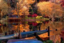 Autumn colors... Colores de otoño...