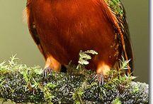 Glenn Bartley - Photos animalière