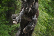 Hästbilder