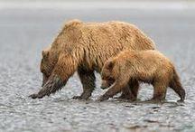 BLOGS - ALASKA DENISE LAKE LODGE! / A variety of Alaska Fishing Relate Topics:  www.deniselakelodge.com/alaska-fishing-news