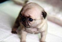 cute animals:-):-):-)