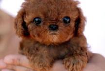 Cute & Furry / by Jennifer Ward