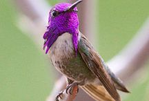 Hummingbirds / by Cathy Cash