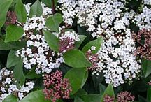 Waterwise cottage Plants
