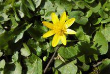 Frühlingsboten / Die ersten Blüten im Jahr sind doch etwas ganz besonderes, findet ihr nicht?