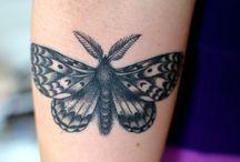 moth & butterfly