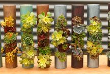 Planters Curatadora / The best planters for sale on the internet. / by Ramshackle Genius