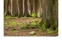 Auf der Jagd - Wald- und Herbstdeko / Dekoration rund um das Thema Wald und Jagd
