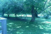 My Old Kentucky Home / House and grounds of our home