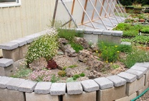 gardening novice! / by D'Ann Roberts