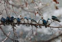 Les petits oiseaux.