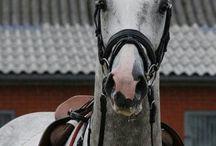 cheval idéal
